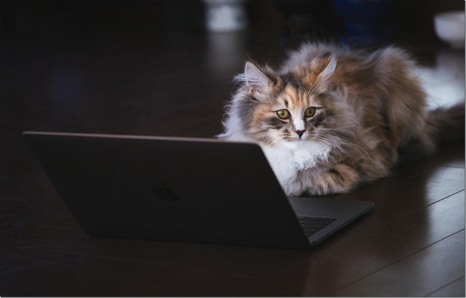cat126IMGL6488_TP_V